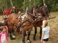 14 Prekrasne kone ...